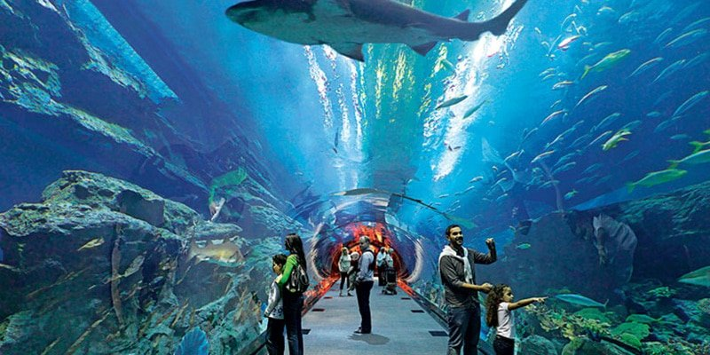 Photo of دبي أكواريوم وحديقة الحيوانات المائية