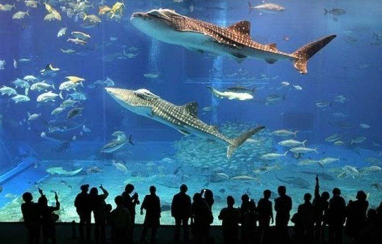 دبي أكواريوم وحديقة الحيوانات المائية في دبي مول