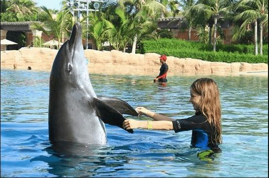 اسعار عروض الدلافين في دبي