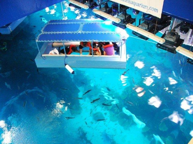 حوض الاسماك في دبي اكواريوم