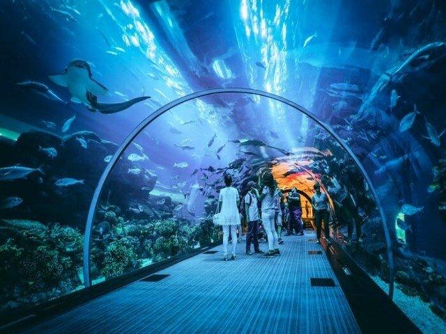 اكواريوم دبي من أروع الاماكن التي تستحق الزيارة في دبي