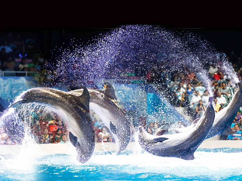 اماكن السياحة في دبي للاطفال - حديقة الدولفين