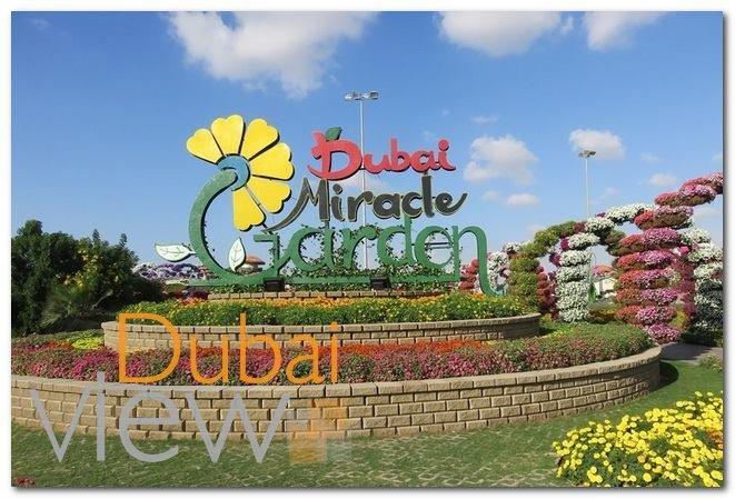 أفضل الأنشطة التي يمكنكم القيام بها في حديقة الزهور دبي