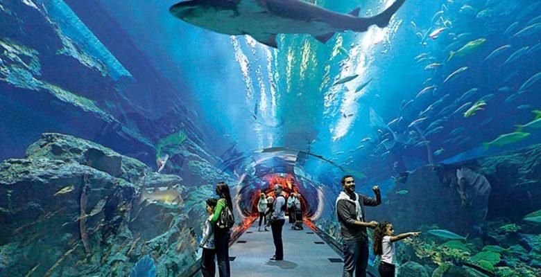 اكواريوم دبي مول وحديقة الحيوانات المائية