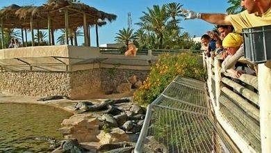 حديقة التماسيح دبي