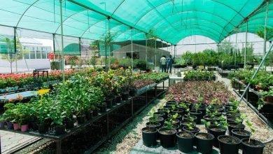 مشاتل دبي للنباتات