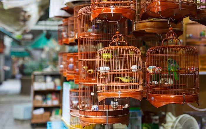 سوق طيور دبي
