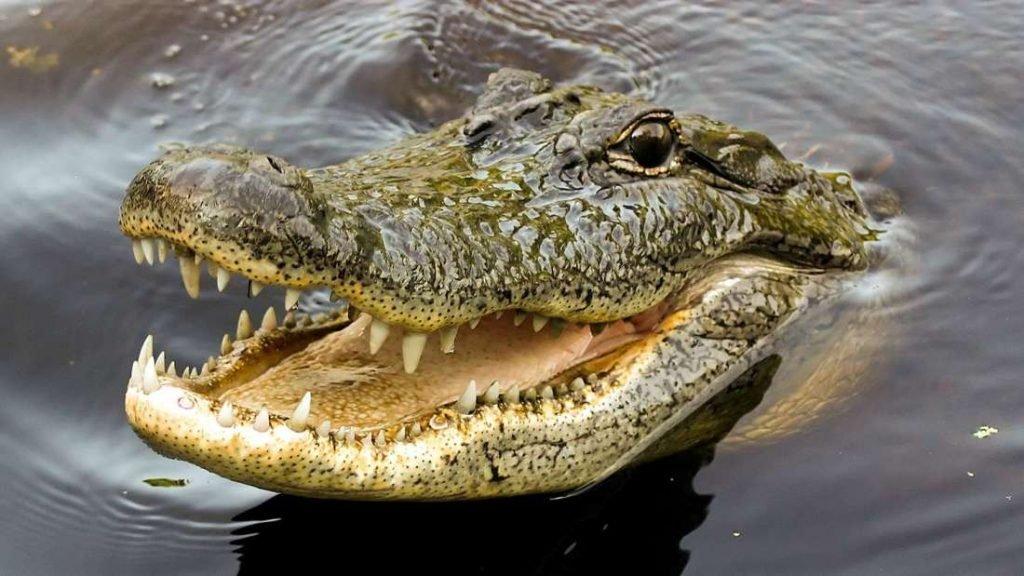 Crocodile Park in Dubai