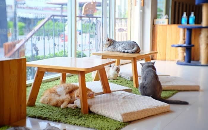 مقهى القطط في دبي